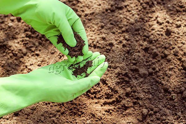 Естественное плодородие почвы присуще целинному грунту, который не подвергается вмешательству человека