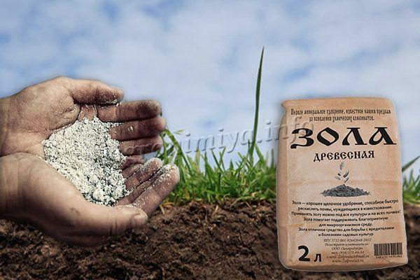 Известковать почву можно также древесной золой