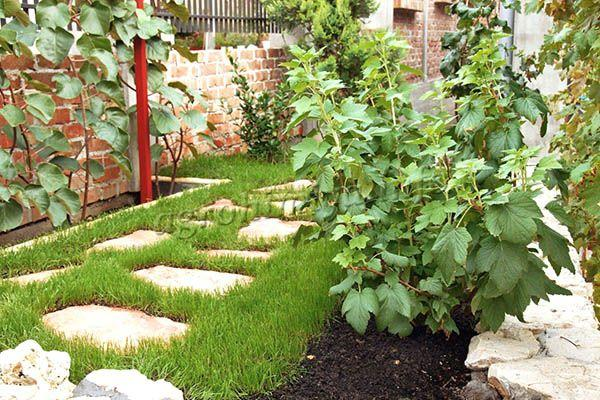 Место для посадки винограда Лора выбирается солнечное, чтобы на куст попадало максимум света и тепла