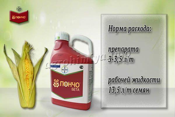 Обработка кукурузы от проволочника делается однократно