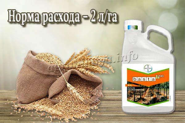 Опрыскивание посевов яровой пшеницы делается в фазе начала восковой спелости семян