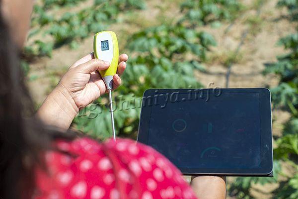 Перед тем как проводить известкование, необходимо измерить кислотность грунта
