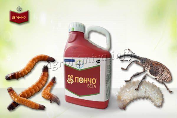 Пончо считается защитником прежде всего от проволочника и долгоносика