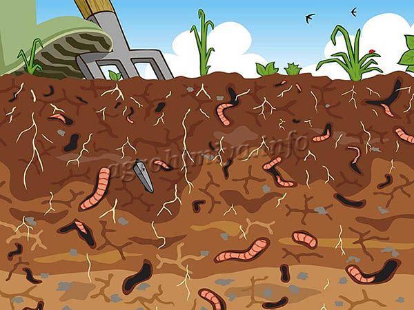 Рыхлость грунта зависит от его типа, насекомых и растений, которые развиваются в земле
