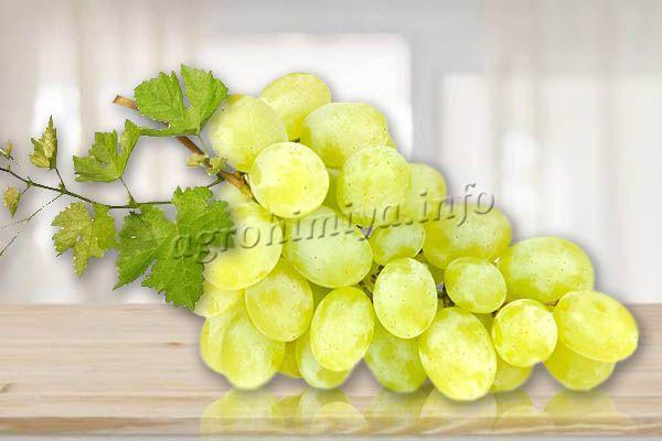 Цвет кожуры бледно-зеленый, но если солнца летом достаточно, то после полного созревания они становятся бело-желтыми с желто-коричневым бочком