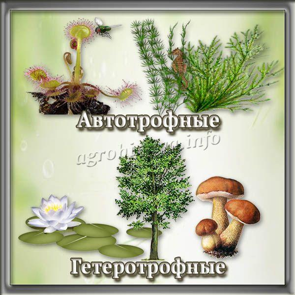 Виды растений по типу питания