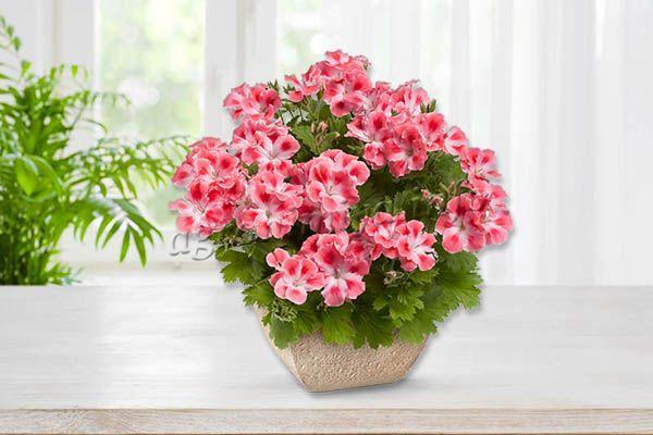 Чтобы добиться обильного цветения, нужно хорошо ухаживать за цветком