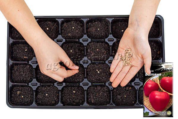 Одним из недостатков сорта Батяня - низкий процент всхожести семян, поэтому сеют много, затем прореживают
