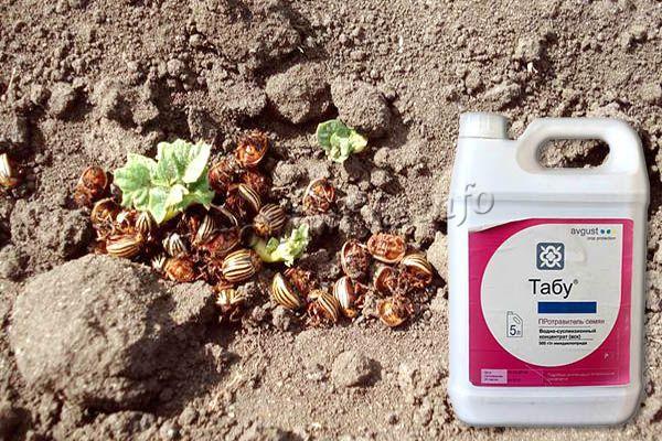 Протравитель Табу имеет высокую эффективность против резистентных популяций вредителей