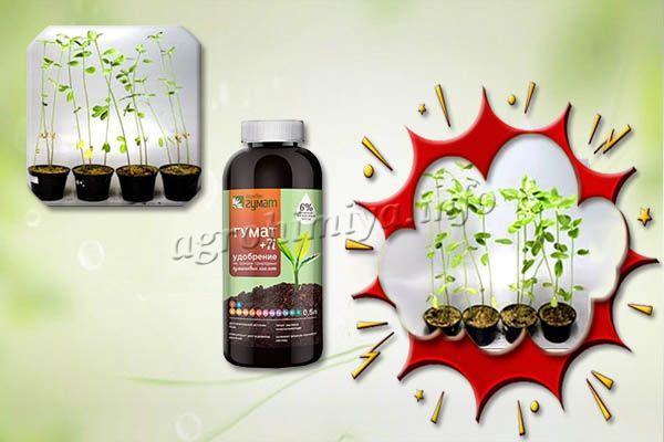 В составе удобрения Гумат +7 микроэлементы содержатся в хелатной форме и легко усваиваются растениями