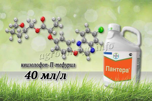 Главный действующий компонент гербицида Пантера – квизолофоп-П-тефурил (40 мл/л)