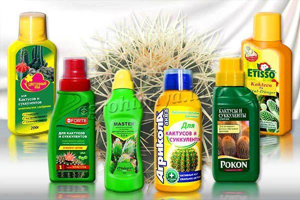 Лучшие удобрения для кактусов