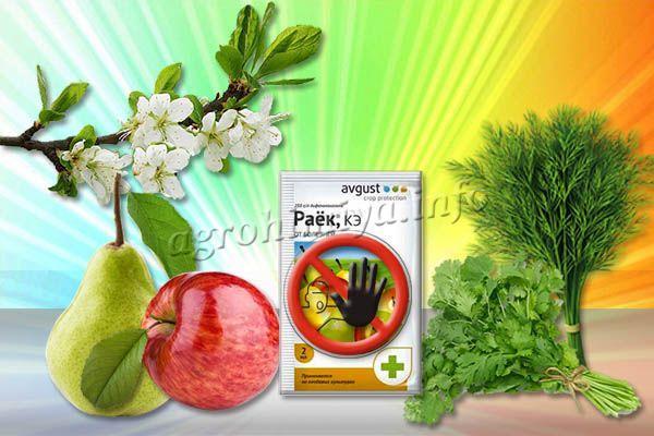 Нельзя использовать фунгицид Раек во время цветения и плодоношения растений, а также для зелени, которая предназначена в пищу