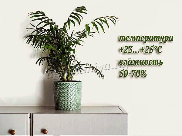 Оптимальная температура и влажность для Финиковой пальмы