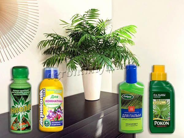 Удобрения для ухода за Финиковой пальмой