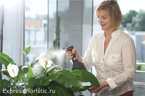 Как ухаживать за цветами в квартире