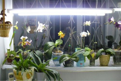 Освещение для фаленопсиса