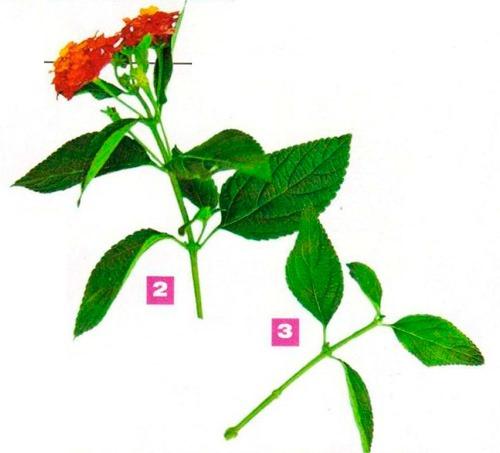 cveti_2