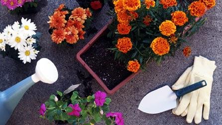 Как приобретать растения в магазине и на рынке